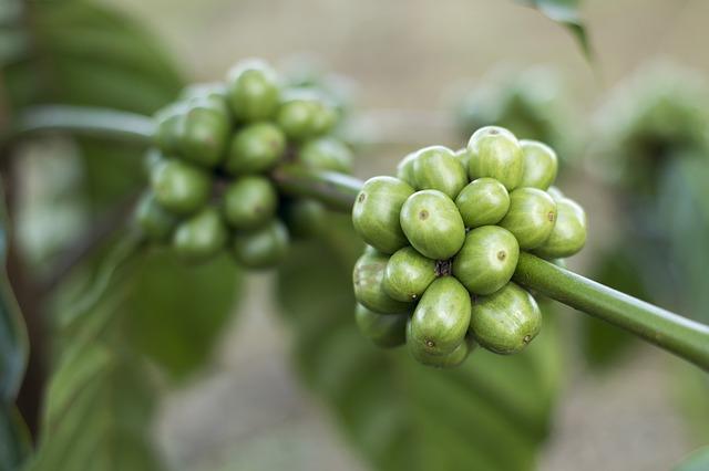 caffè-verde-proprietà